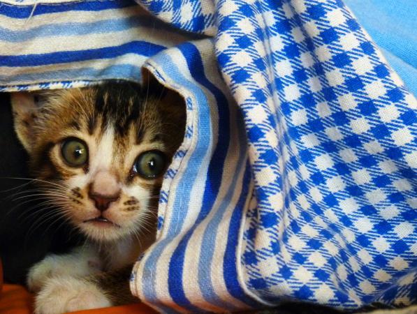 Kitten in hiding