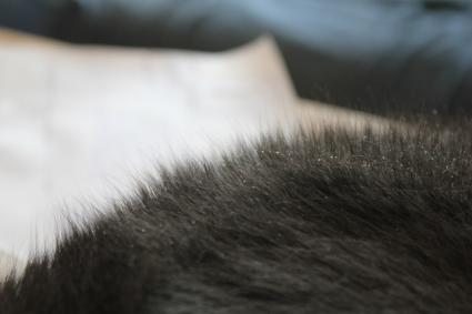 What to do about bad cat dandruff