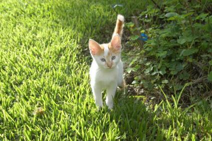 kitty says meow
