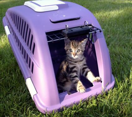 Cat in a travel carrier