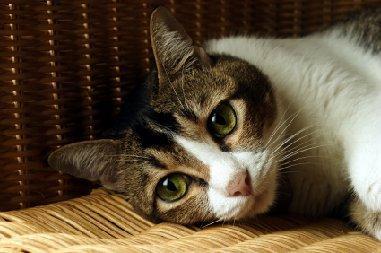 Forlorn cat