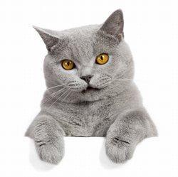 Male cat