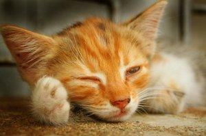 How do you nurse a lethargic kitten?