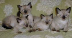 Emerald Isle kittens; Image used with permission from Pat McGraw.