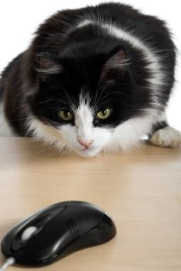 cat with a computer mouse