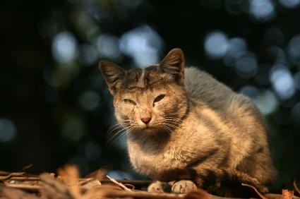 Feline Herpes Lovetoknow