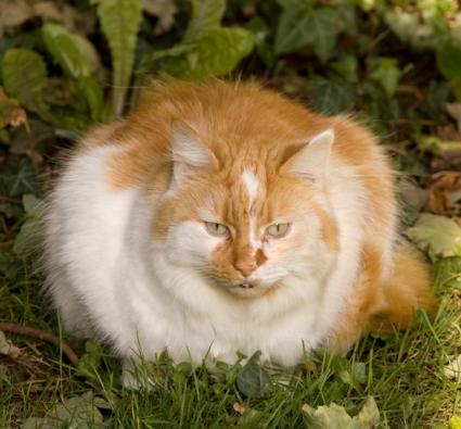 an analysis of the issues of fat cats The tuc has a history of developing analysis and research to inform economic and employment-related issues search research & analysis  to stop fat cats, says tuc.