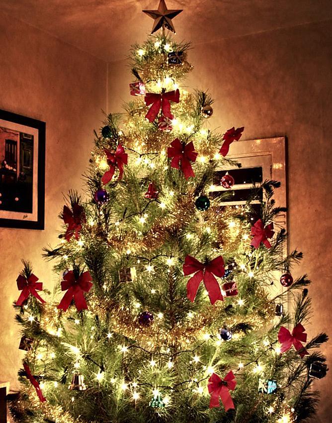 christmas tree bow decorations  Rainforest Islands Ferry