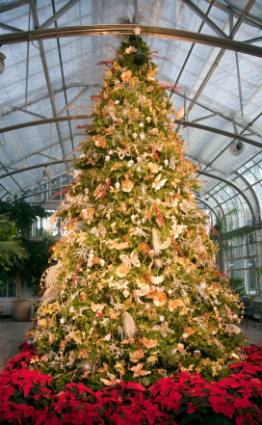 Pictures of Decorated Christmas Trees [Slideshow]