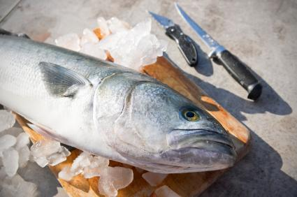 Blue Fish Recipes on Fresh Caught Bluefish Should Be Cleaned And Gutted As Soon As Possible