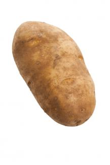 Nice-looking russet potato
