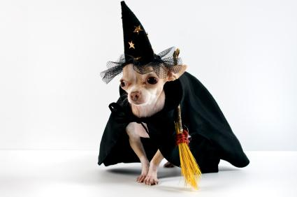 dog witch