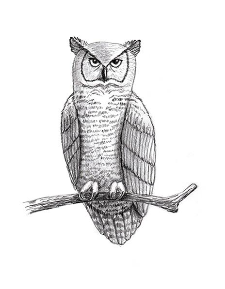 How to draw an owl slideshow for Draw the owl
