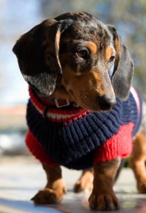 Vintage Knit Dog Coat Sweater knitted knitting pattern