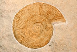 Plaster Fossil