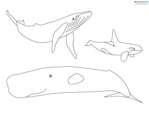 Sea Craft Patterns 2 whale