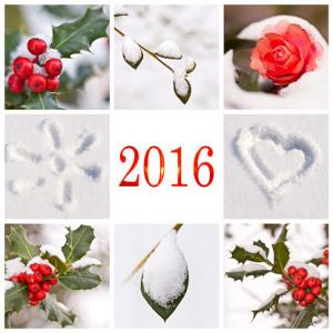 New Year card with holly and snow