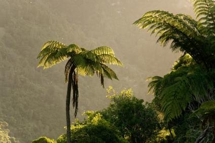 Wanganui Park