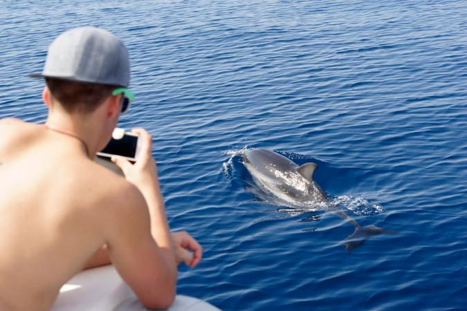 Watching dolphin from boat