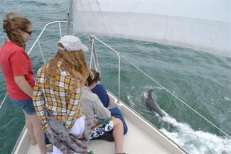 Kids watching dolphins