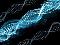 Diet based on genes