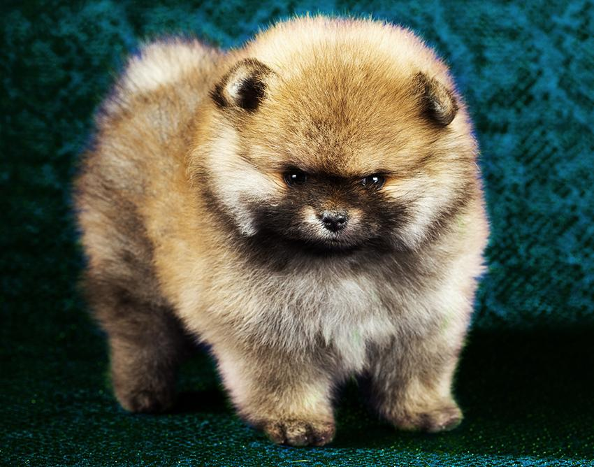 Cute Small Dogs For Sale