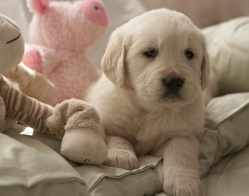 On The Leg Toy Dog