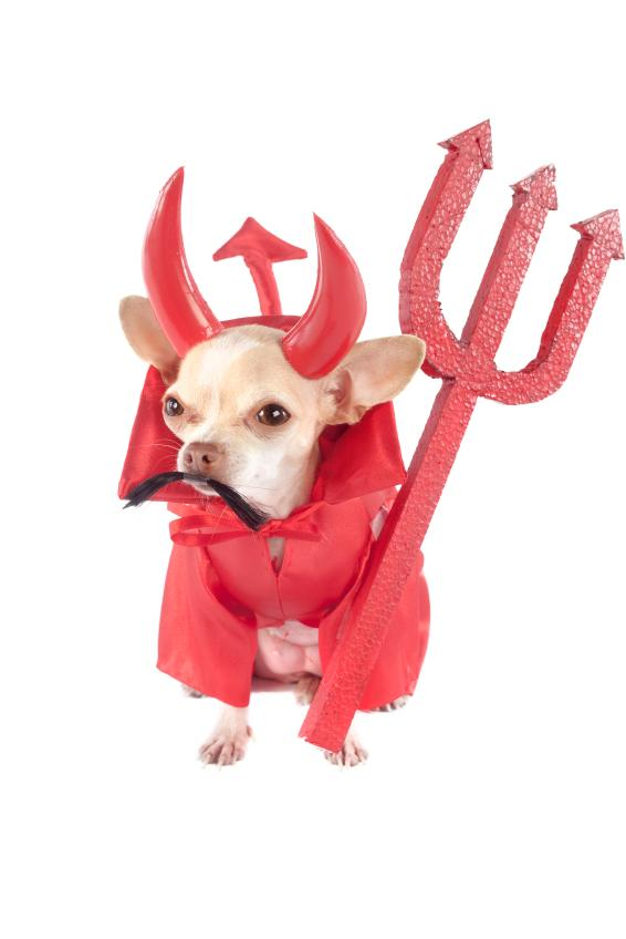 Funny Halloween Dog Pictures [Slideshow]