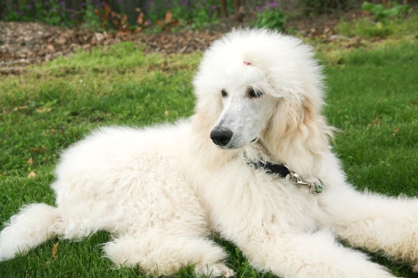 ... dog breeds picture top 10 worlds smartest dog breeds border collie dog