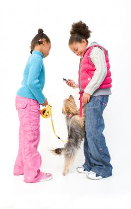 Yorkshire Terrier jumping on girls