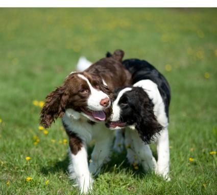 Flirting dogs