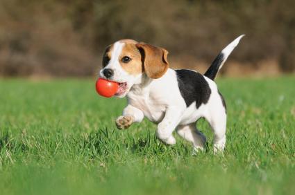 Chew Toys and Treats