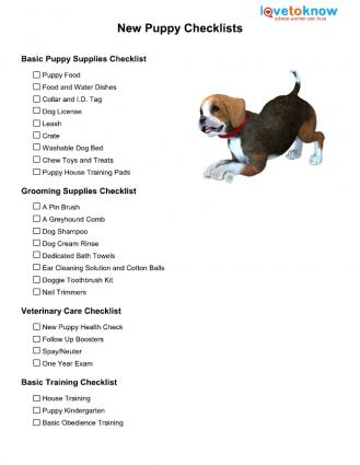 Dog Food And Water Schedule
