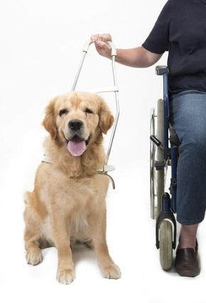 Ποια είναι τα είδη των σκύλων οδηγών;