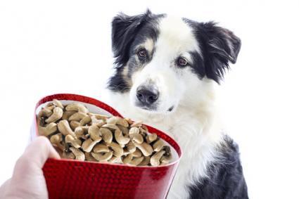 Dog with box of cashews