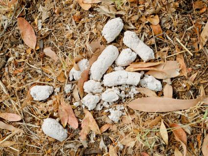 What Causes White Dog Poo Lovetoknow