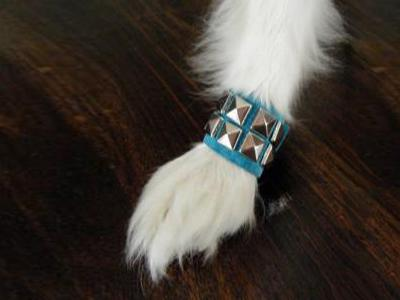 Studded cuff for dogs