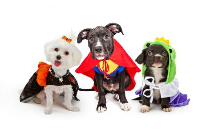Dogs Wearing Halloween Costumes