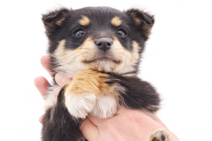 Puppy in hand
