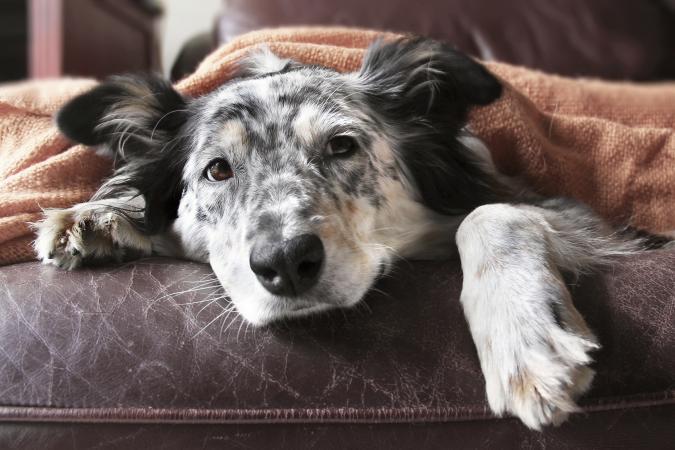 dog feeling unwell