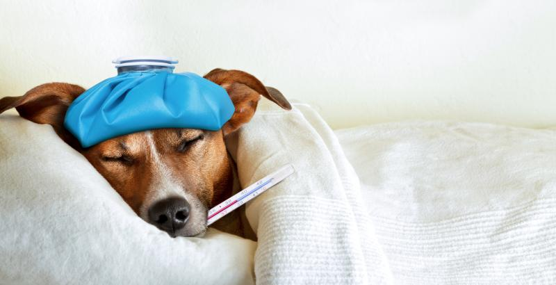Best Anti Nausea Medication For Dogs