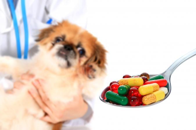 Can You Give A Dog Metronidazole With Food