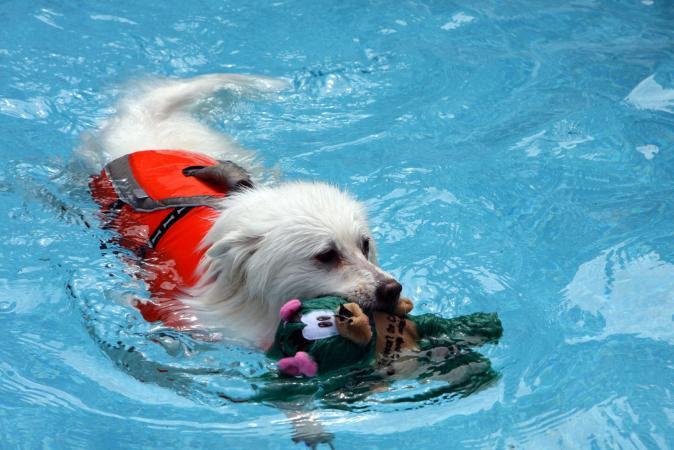 Dog having a good swim