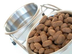 Why You Shouldn T Change Your Dog S Food
