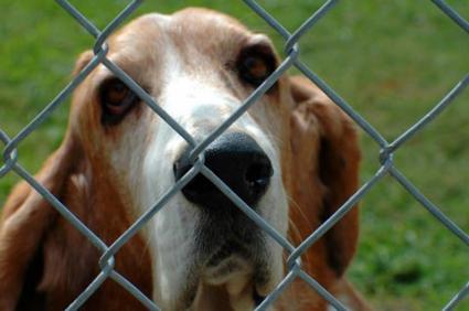 why do we need dog fences