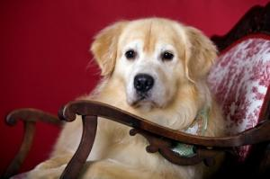 Tired of your dog shedding on the furniture?