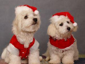 Holiday canines