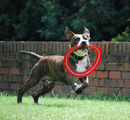 Dog Heartworm Natural Cure