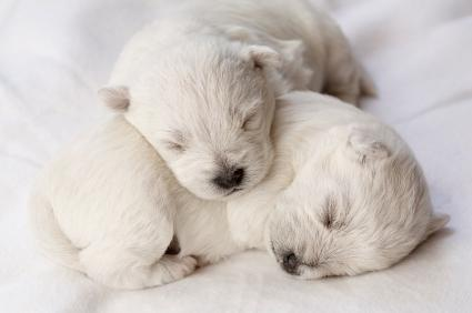 Baby Puppies on Newborn Puppies