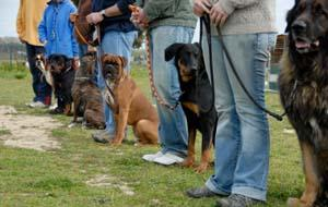 Group of well-behaved dogs